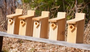 build building birdhouses farm