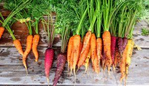 grow carrots carrot