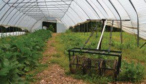 cedar ring solar hoop house crops