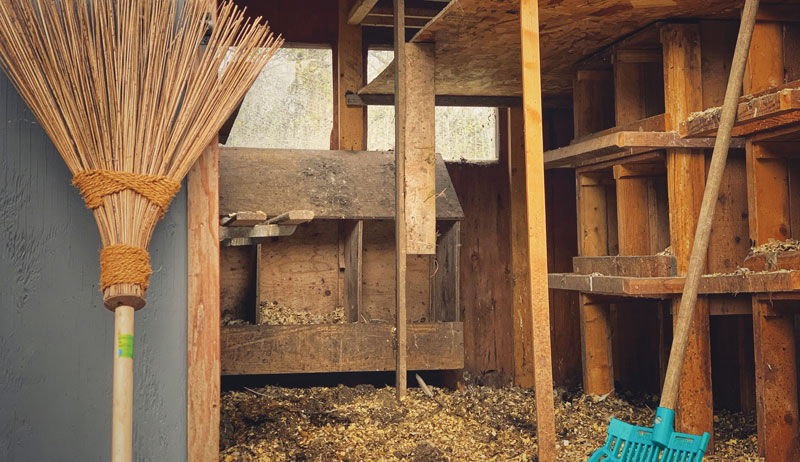 chicken coop spring clean cleaning