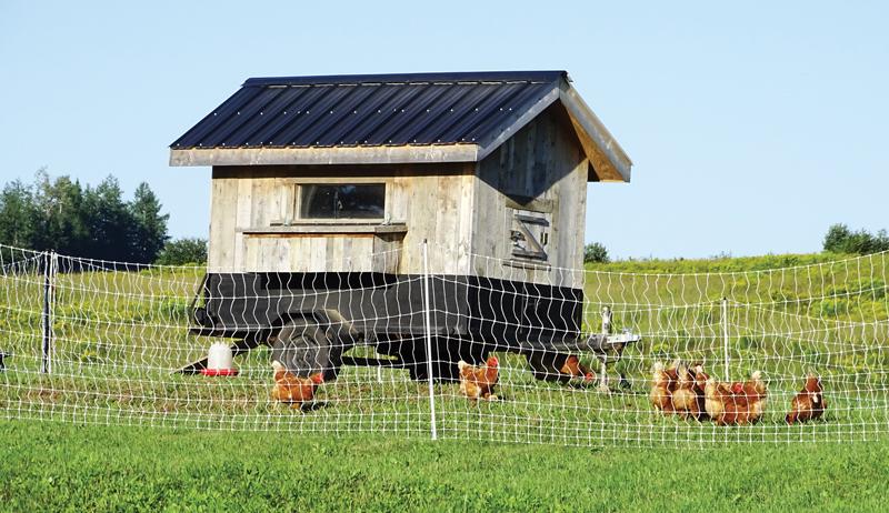 DIY weasel box chicken tractor