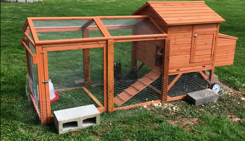 flat-pack chicken tractor