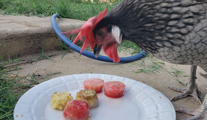 recipes for homemade chicken treats
