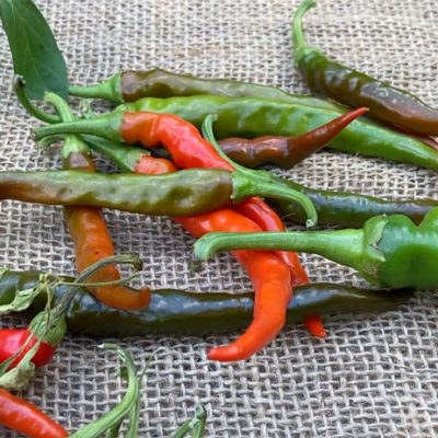 Chili Peppers Are A Fun & Useful Garden Crop