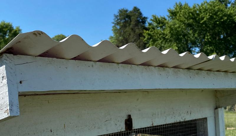 skillion coop roof corrugated chicken chickens