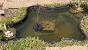 decorative water pond