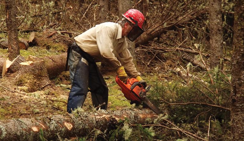 woodlot management