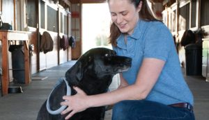 animals alternative therapies therapy