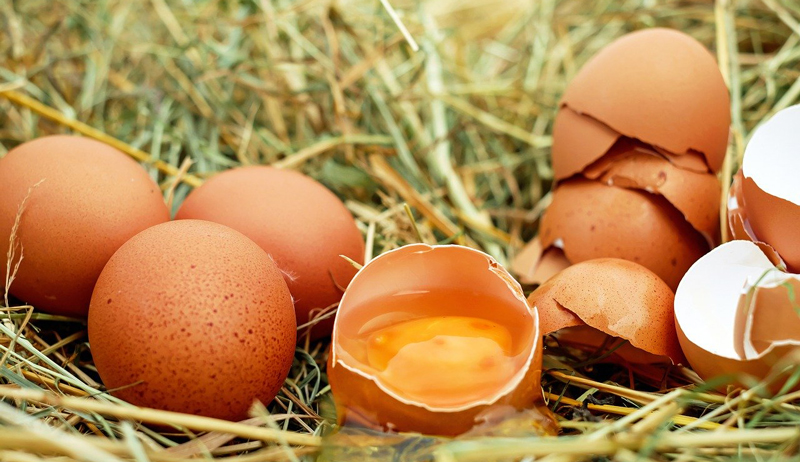 egg science
