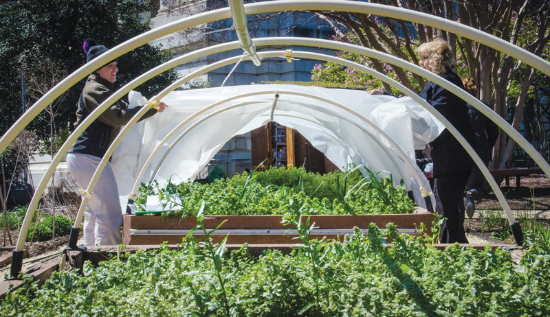 small urban farm plan