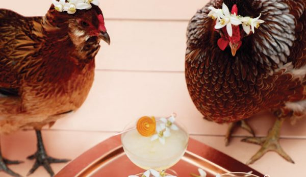 Recipe: Enjoy This Orange Blossom Cocktail By The Coop!