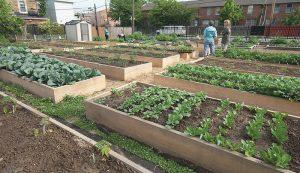 urban small farm plan