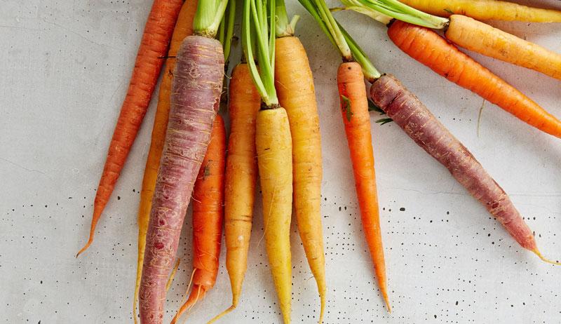 fermented dill garlic carrots