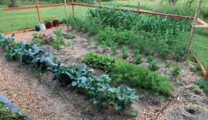 weed suppression control natural alternative