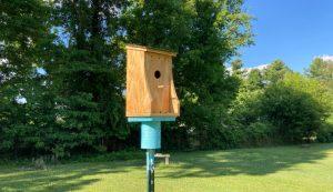 bluebird nest box