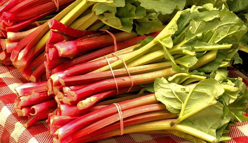 fresh rhubarb shrub drink recipe