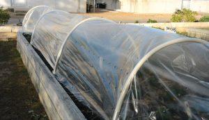plant hardiness zone zones climate