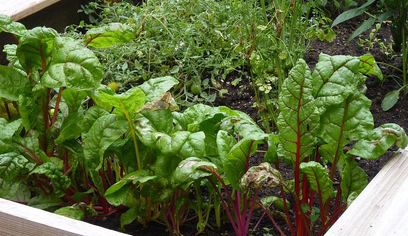 garden novel coronavirus