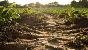 healthy garden soil air water