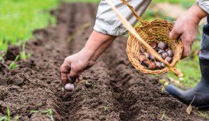 nutritious crop crops garden