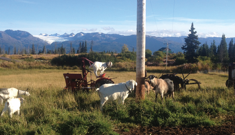 Alaska farmers farming agriculture climate change
