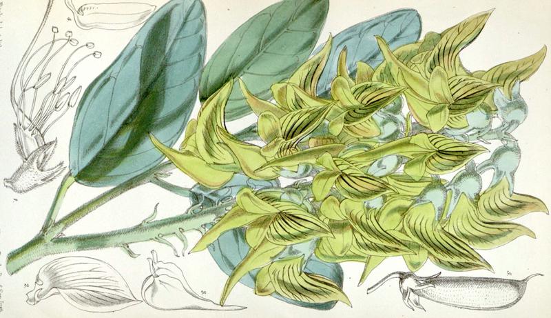 green birdflower hummingbird plant