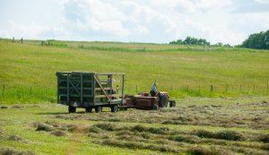 hay season baling
