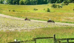 restore an old hayfield