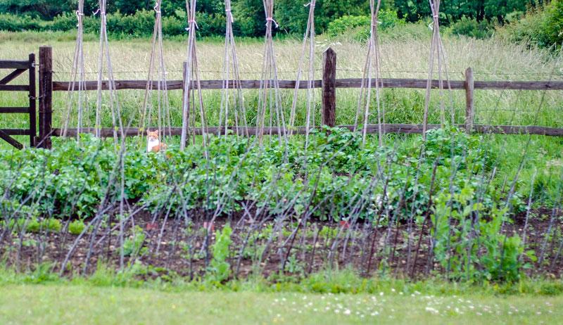 first-year garden