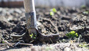 holistic soil gardening ecosystem garden