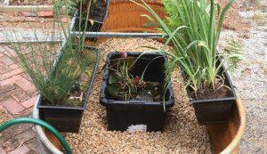trough water garden