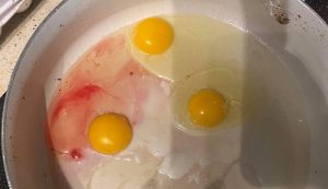 blood bloody egg