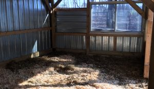 sheep winter shed bedding