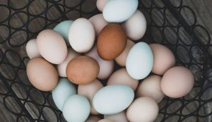 chickens chicken eggs egg colors color