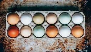 sell eggs selling sales