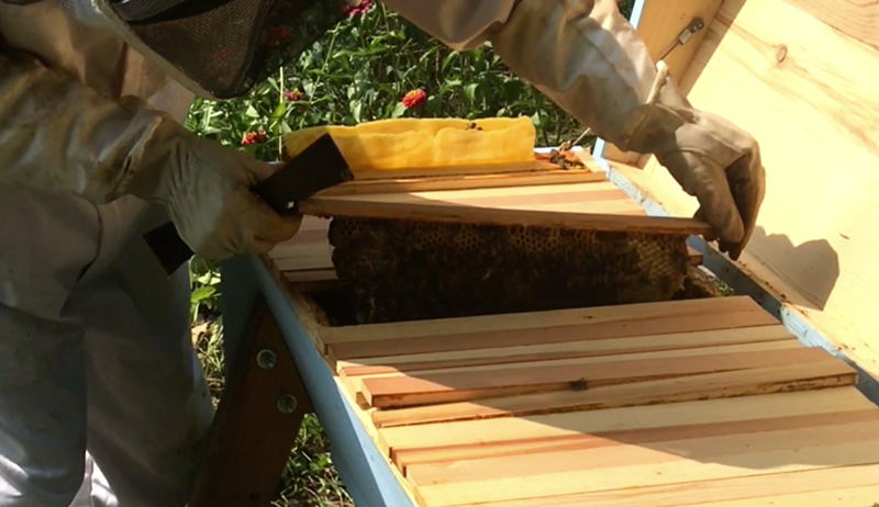 late-summer late summer beehive hive check