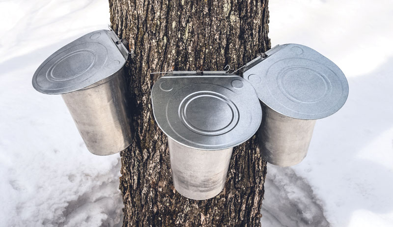 maple syrup sugaring 3 pails