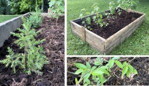 build a mini nursery for tree saplings