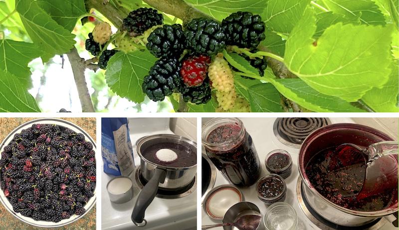 mulberries mulberry jam jelly recipe