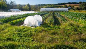 no-till organic vegetable farm