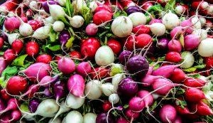 fall radishes