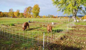 livestock garden