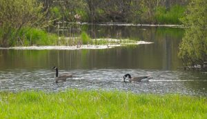 pond repair old wildlife