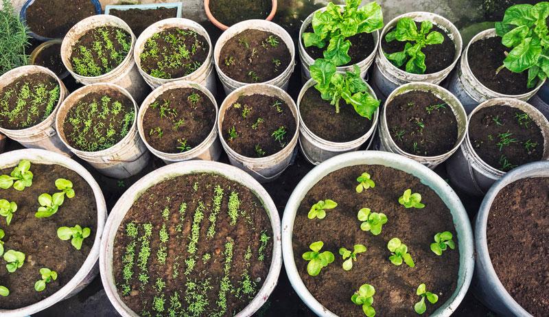 potting soil pots plants starts plants