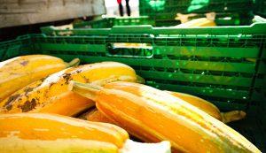 produce storage harvest crates trays bins vegetable