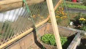 cold frame frames gardening garden