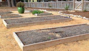 raised bed beds garden