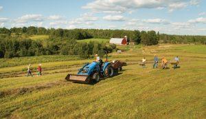restore old hayfield