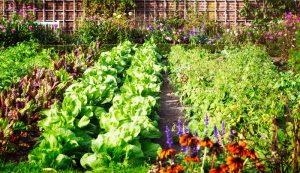 salad mix greens produce