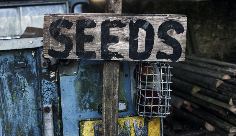 selling sell seed seeds save
